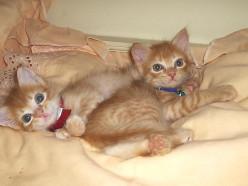 Adopting Sibling Cats