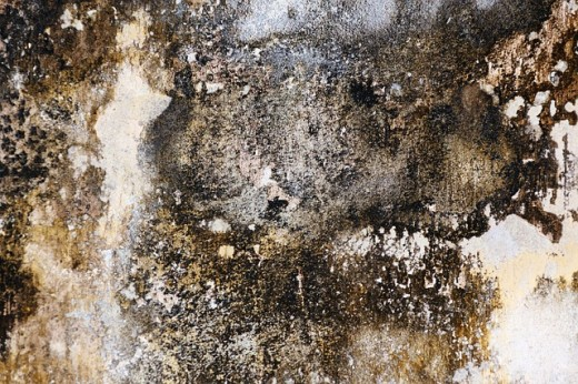 Mold can make people sick.
