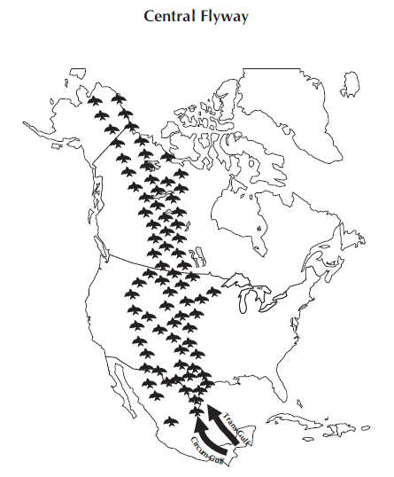 The Central Flyway of North America