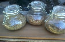 Dried herbs : aniseed , oregano and basil in airtight containers .