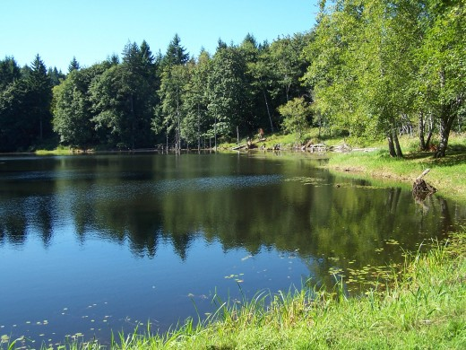 The pond awaits