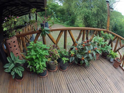There were a lot of crooked bamboo poles which the local carpenters didn't appreciate. They wanted to just burn them, but I had them used as my railing! Much better use and they are beautiful. In the background you can see one of the bamboo groves.