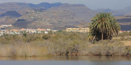 The Maspalomas lagoon of La Charca, and the mountains of Gran Canaria beyond
