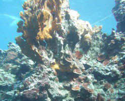 Oyster Bay Coral Reef - Some of what needed to be displaced to widen the bay's entrance.