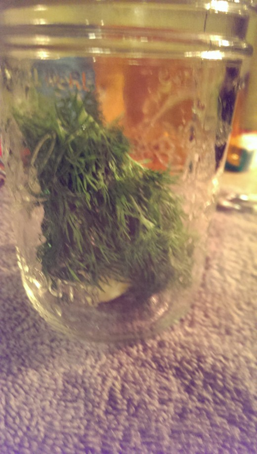 here is my dill and garlic cloves in the jar