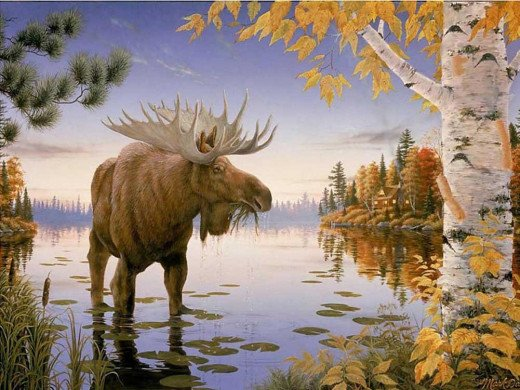 Bull Moose - Art Print on Canvas