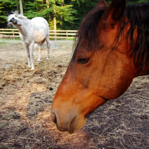 Horses behave differently in different situations