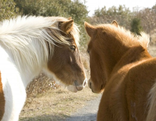 Horses are sensitive and intelligent beings.