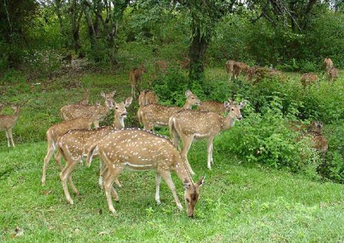 Dachigam National Park, Srinagar, Jammu & Kashmir