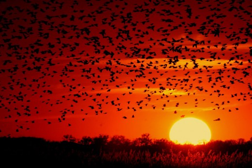 I love this one, with the black birds against the sunlight.  A truly beautiful image!