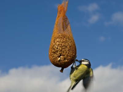 Ha! they can't get my nuts!