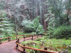 Magnificent Muir Woods National Monument  - Northern California