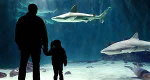 Amazing shark exhibit with lots of sharks, and all the sea creatures any little tike could like- they are sure to find at least one new favorite!