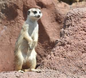 Fun kid zone includes caves with meerkats and and walls lined with turtles, frogs, lizars, snakes, bugs, fish, and oh- don't forget the huge lemur exhibit !!