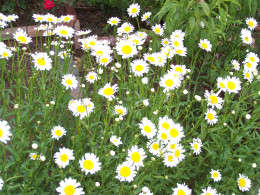 Flowers grow best in warm sunshine...