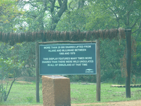Snares removed over the years from Swazi Game Reserves