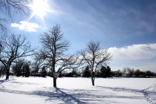 Beautiful Winter sunny scene with snow and trees.