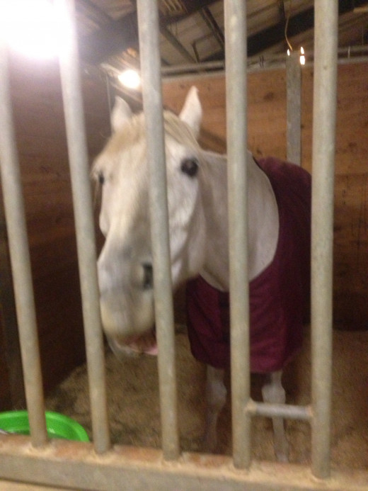Ears pinned not happy, had to eat dinner a few minutes late, at the horse show.