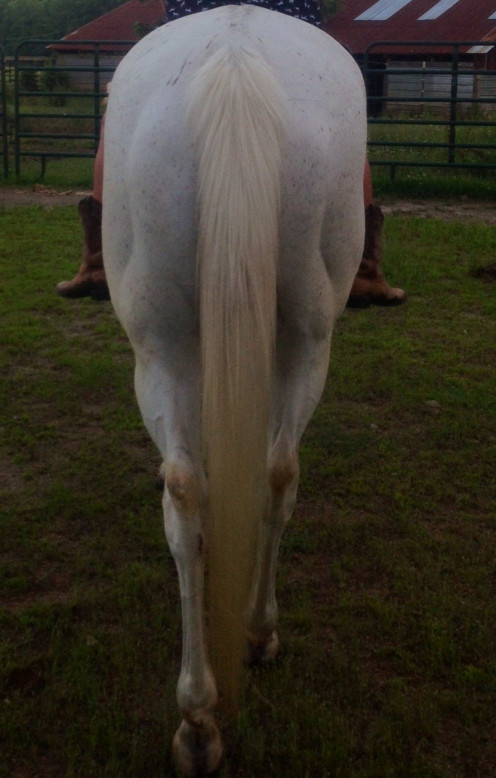 Relaxed and at ease tail. Just a little dirty haha.