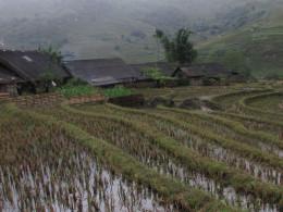 Rain soaked paddy fields