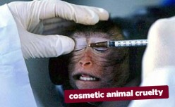 Animal Testing, the Immorality of it All.