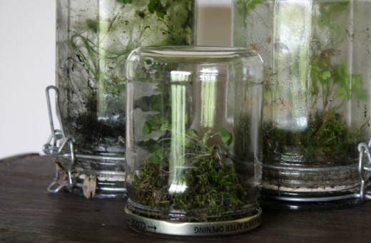 Terrarium from Lidded Glass Jars