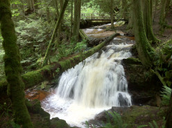 Waterfall near Roberts Creek