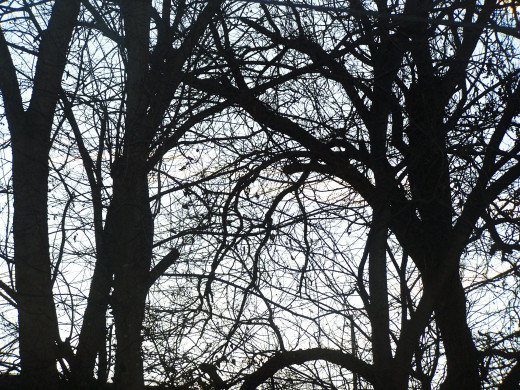 In winter the trees remind us that life is fleeting and we must enjoy while we may...