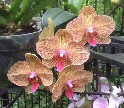 Orchids are easier to grow than you think. They need 2-3 hours of morning sun and water about once a week or when the leaves droop.