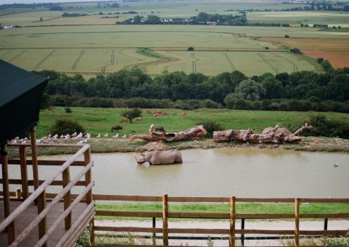 A black rhino bathing in the dam in front of the lodge, with Romney Marsh in the distance.