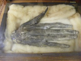 "The Hand of Glory on display at the Whitby Museum...proof that these things were actually used in some facet of ""witchcraft"" in years long ago."