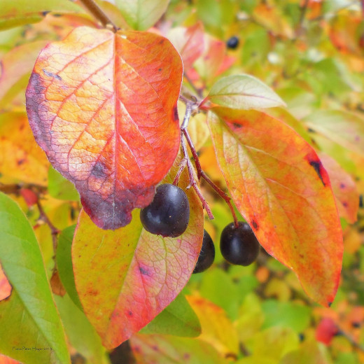 Colorful leaves and berries