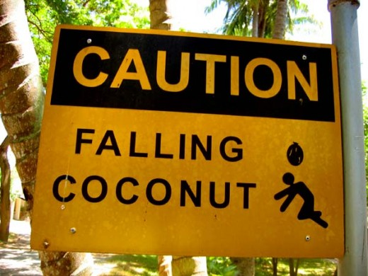 Caution: Falling Coconut.