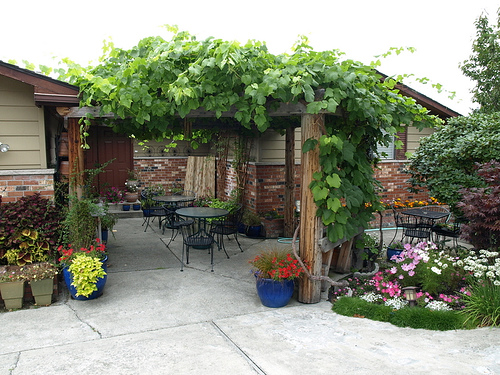 Your patio cover could look like this when they are covered with greenery.  Photo courtesy of http://www.flickr.com/photos/pdegroot/1431332198/