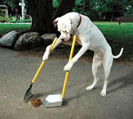 Training a Dog Properly
