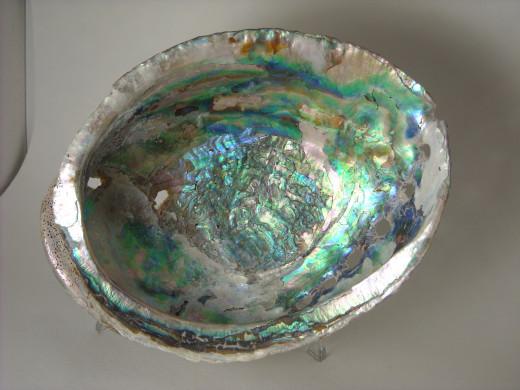 Abalone 3 Inside