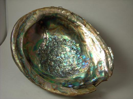 Abalone 7 Inside