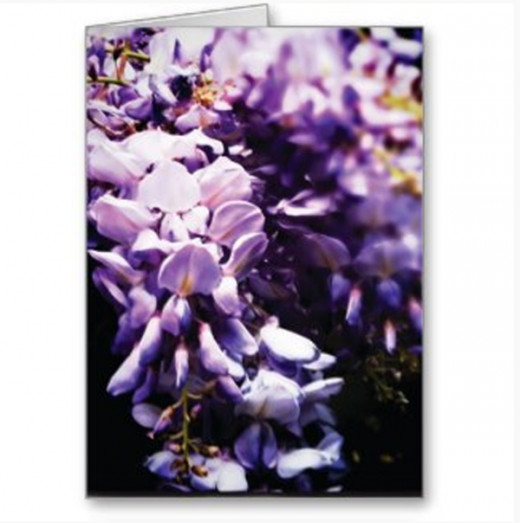 Wisteria greeting card (blank inside, or add your own text to print)