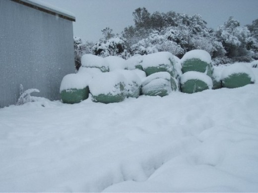 Hay-ledge covered with snow, which the cows required to survive.