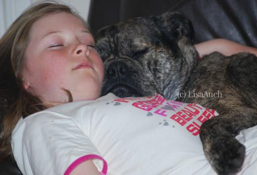 Dog Sleeping. Bullmastiff type dog