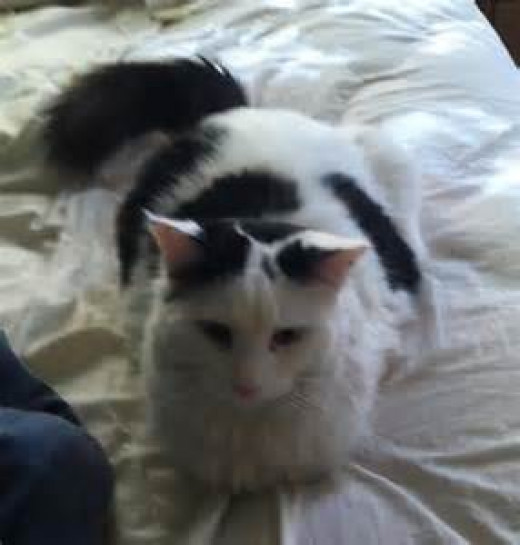 """""""Sami"""" knew where to come for help. Cats know where they are accepted and loved. """"Sami"""" apparently had no doubts that our family would treat him well and accept him in our home. We love you """"Sam""""."""