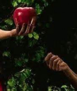 What was the fruit that Adam and Eve ate?