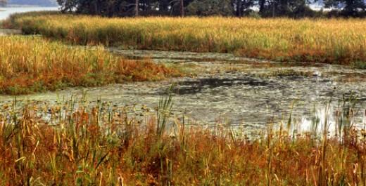 Manitou Island Wetlands