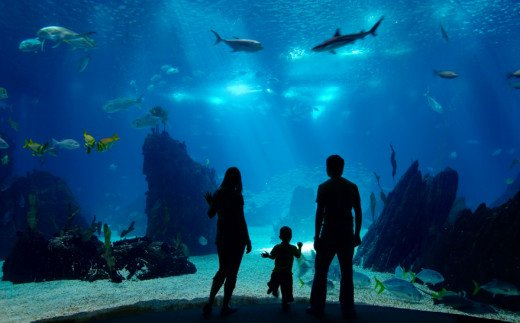 Virginia Aquarium, Virginia Beach