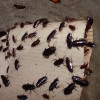 How To Get Rid of the 5 Most Common Household Pests