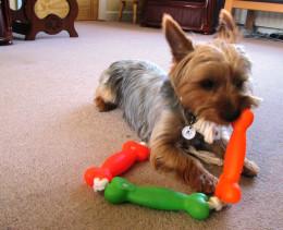 Google Blogs - My Dog Blog