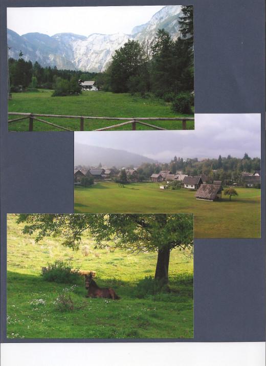 Farmland and lush meadows