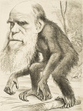 6 Common Misconceptions about Evolution by Natural Selection