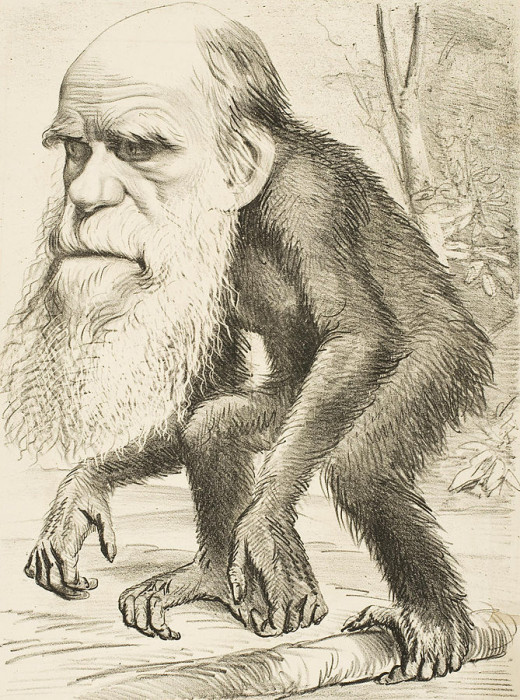 A caricature of Charles Darwin as an ape, published in The Hornet, a satirical magazine (1871)
