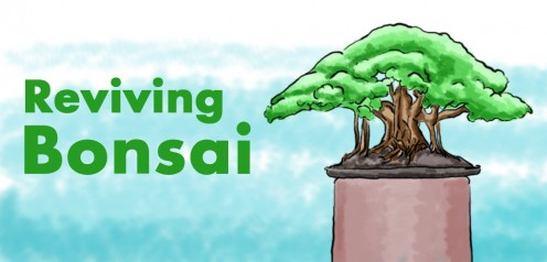 How to Revive a Dying Bonsai Tree—Solutions That Work
